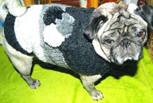 Як швидко зв'язати светр для собаки