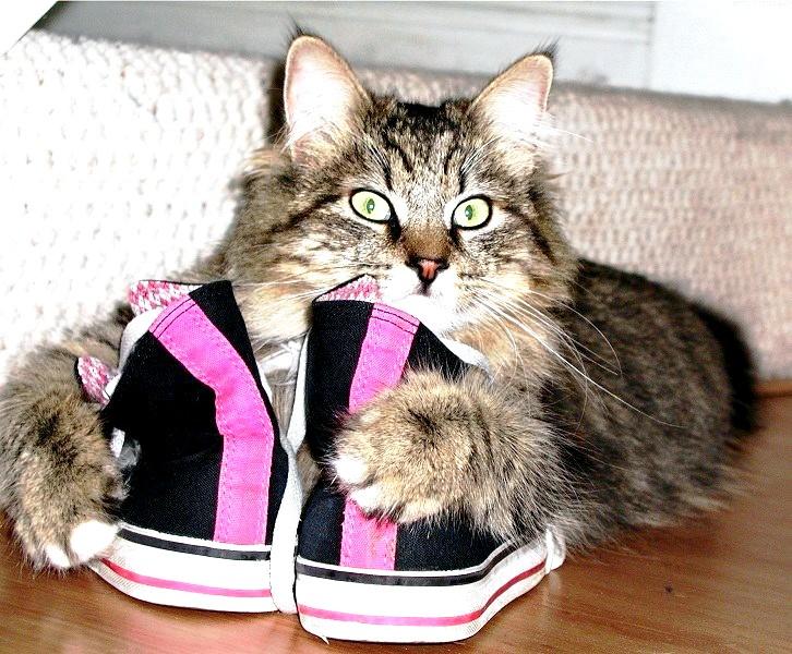 що буде якщо дати кошеняті валер'янки?