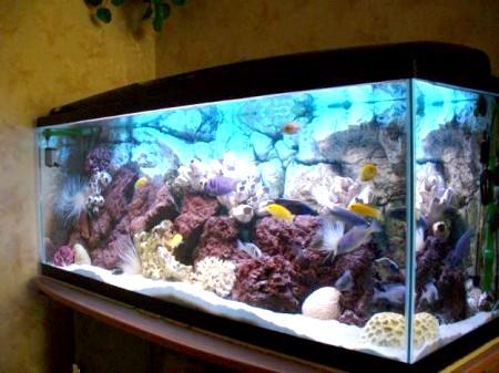 як охолодити акваріум