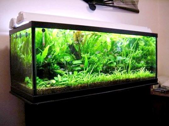 акваріум в перегородці своїми руками