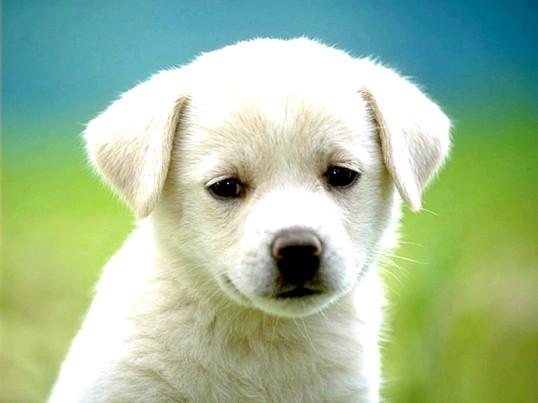 Що робити, якщо у собаки з'явилася лупа