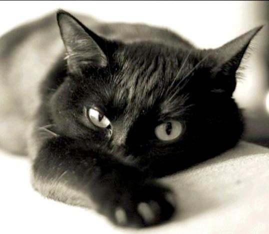 Як позбутися від вушного кліща у кота