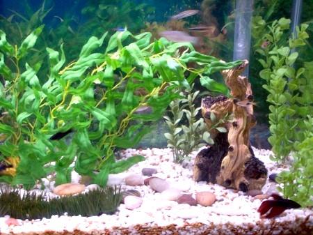 Як мити грунт в акваріумі