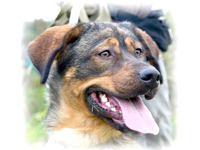 як знайти загублену собаку