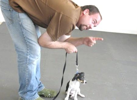 Як навчити собаку команді