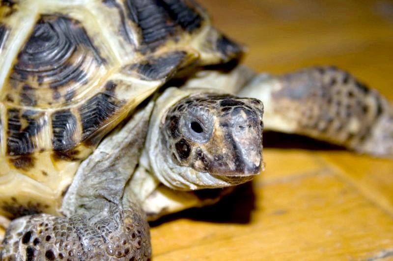 Як назвати черепаху