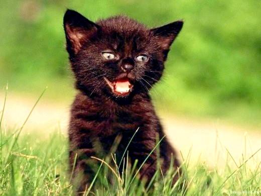 Як назвати чорного кошеня - хлопчика