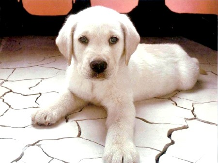 ім'я для собаки алабая