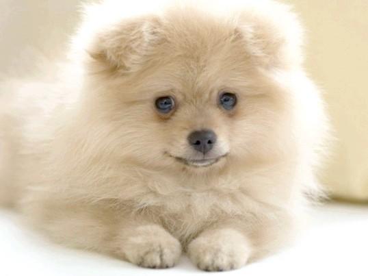 Як не заразитися глистами від собак