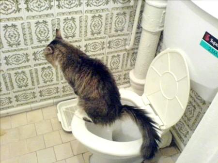 Як відучити кота мітити на двері
