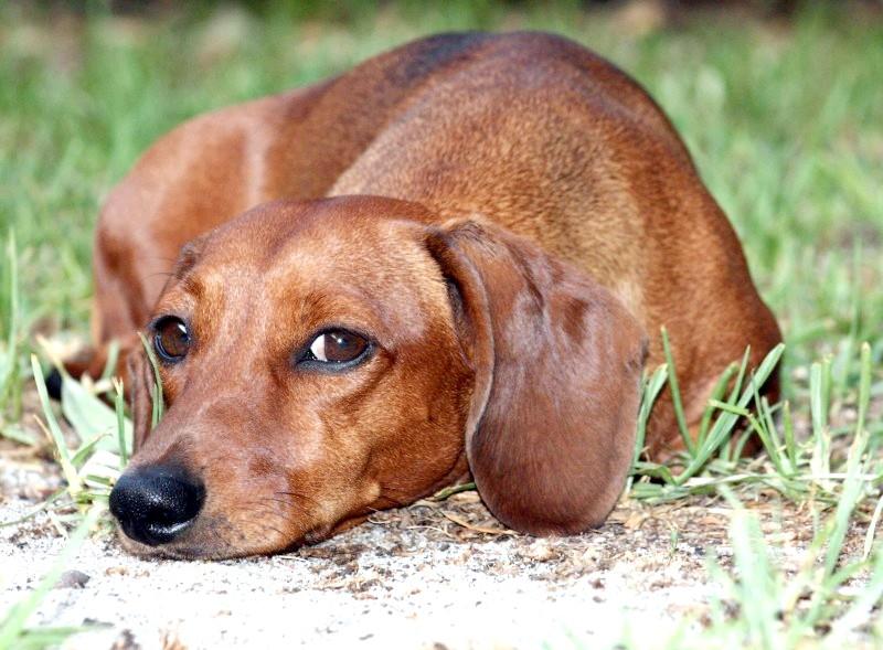 Як відучити собаку гризти провода