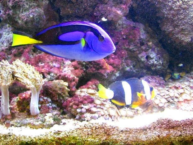 як почистити дно в акваріумі