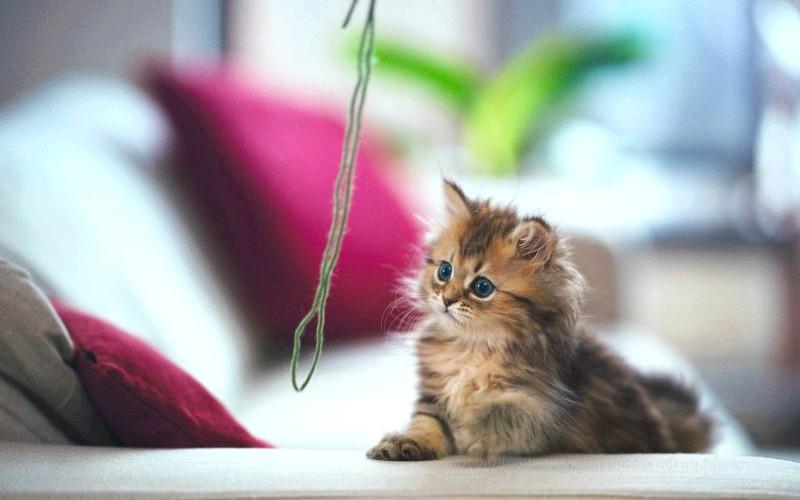 Як зробити іграшку для кішки своїми руками