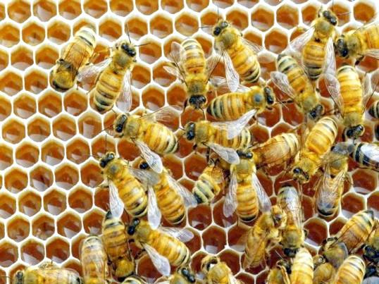 Як зробити відводок бджіл