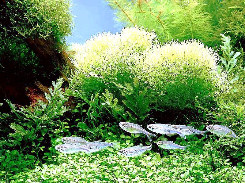 як чистити акваріум не витягуючи рибалка