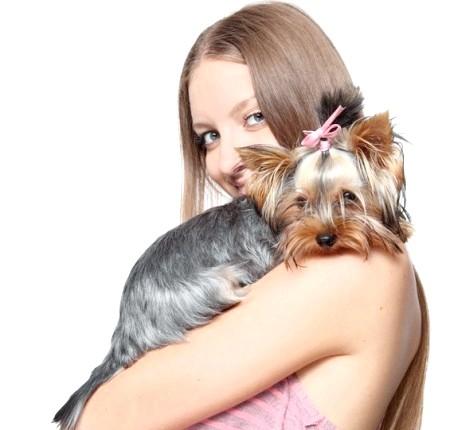 Як вибрати кишенькову собачку