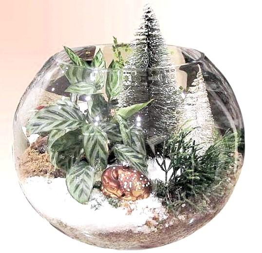 Як створити новорічну подарункову композицію з кімнатних рослин