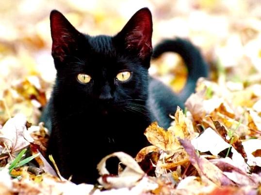Як видалити запах від кішки в будинку
