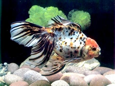 Як доглядати за акваріумом з рибками