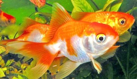 Як доглядати за рибами в акваріумі