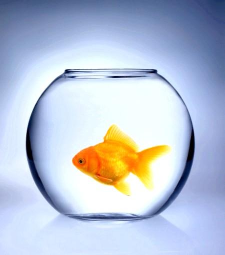 догляд за зоотов рибками