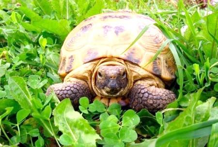 Куди віддати черепаху