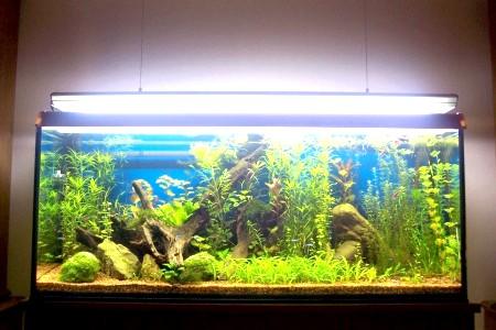 як заповнити акваріум