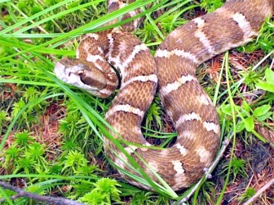 Як вивести змій