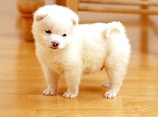 Як недорого купити породистого щеняти