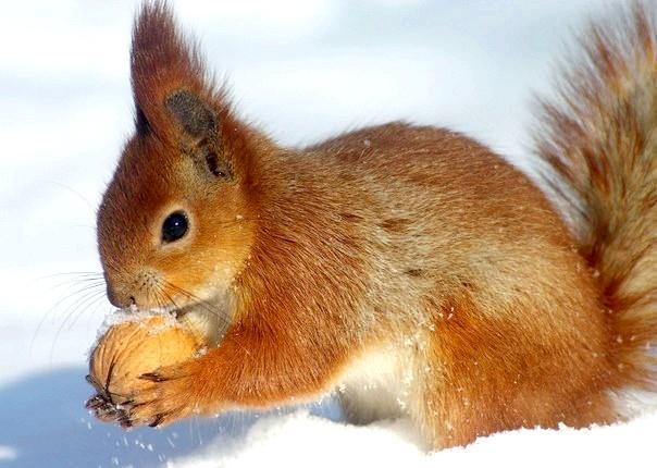 Як звірі готуються до зими