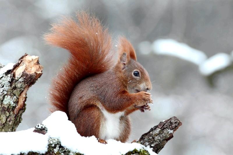 як тварини готуються до зими