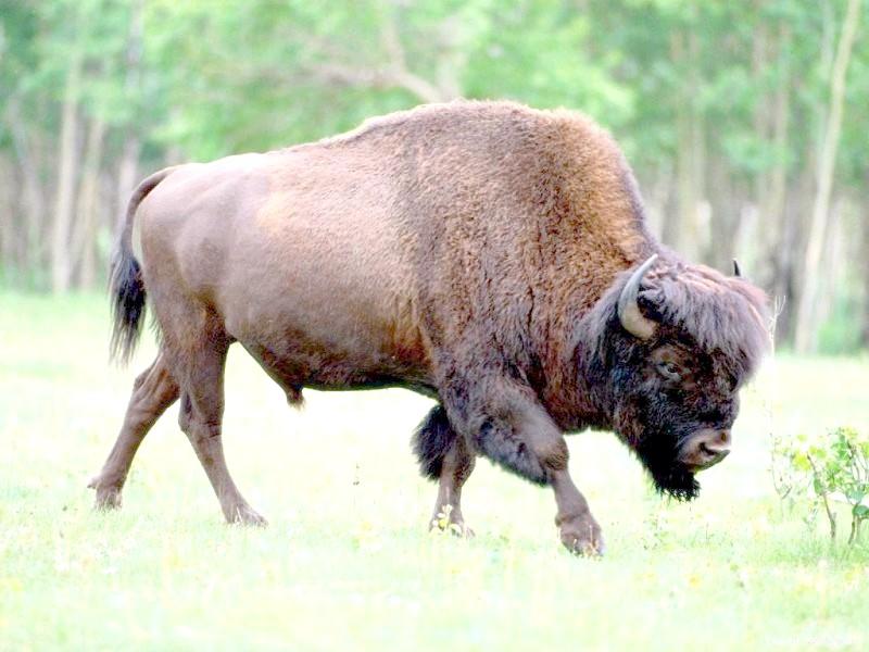 Які реліктові тварини мешкають на території Росії
