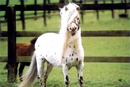 Які коні найменші по зростанню?