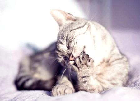 Кішка в будинку - користь чи шкода?