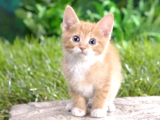 Кошеня линяє - чи можна з цим боротися