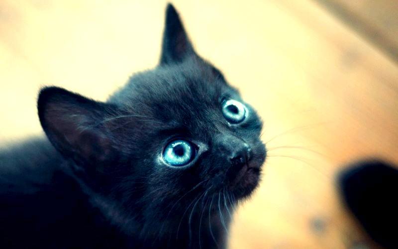 Чому очі кошеняти змінюють колір