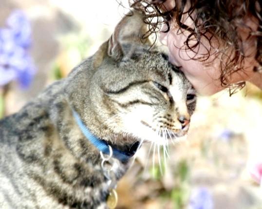 Як навчитися говорити по-котячому