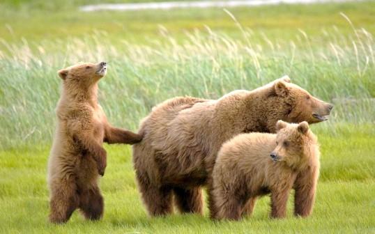 Як звірі виховують своїх дитинчат