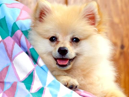 Догляд за знайденим щеням