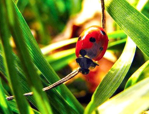 Що і як їдять комахи