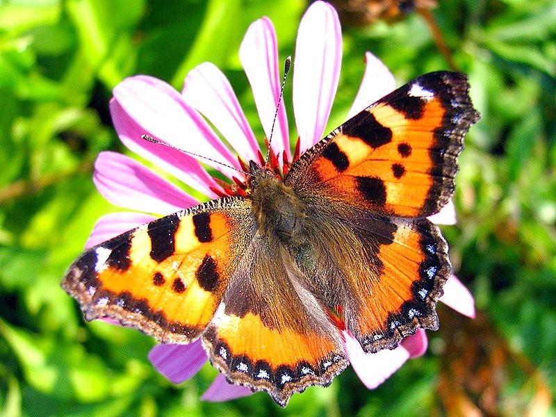 Які комахи прокидаються навесні