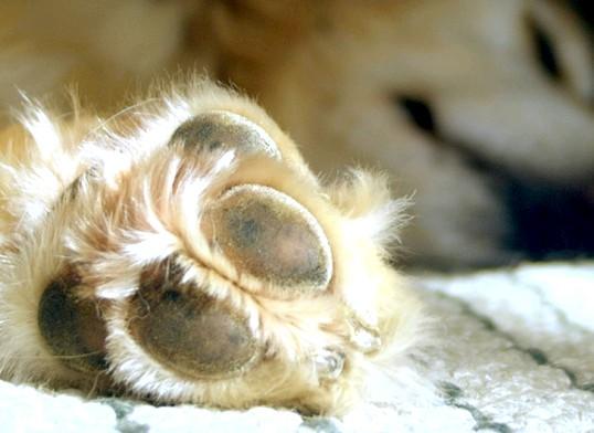 Як підстригти кігті собаці