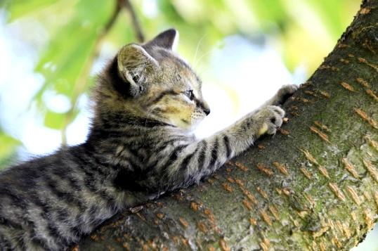 Як приручити кота точити кігті