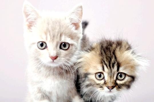 Як прищепити кошеняті хороші манери