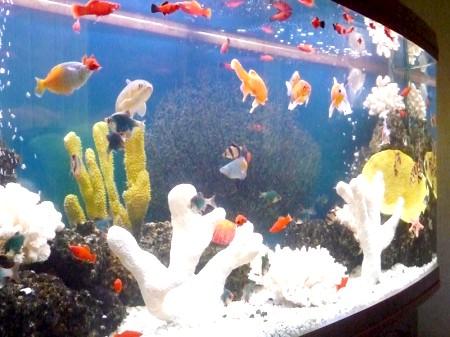 заселеність акваріума