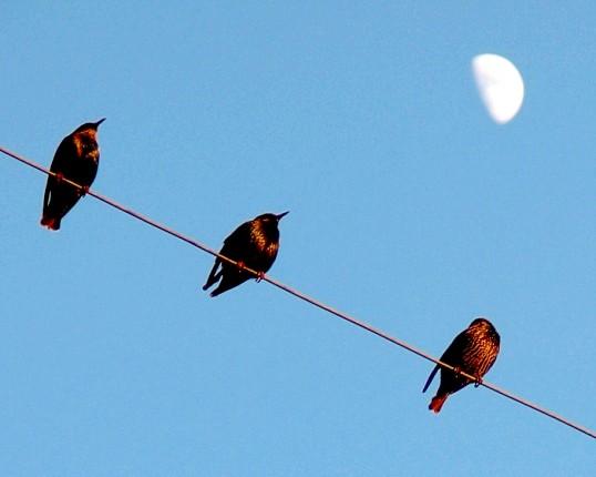 Чому не б'є струмом птахів, які сидять на високовольтних дротах