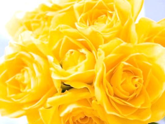 Які квіти подарувати дівчині при розставанні