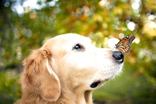 Як зробити свою собаку щасливою