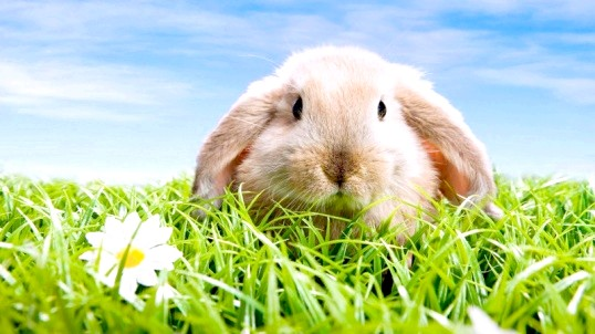 Як зробити укол кролику
