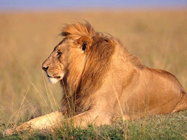Які тварини водяться в Африці